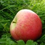 õun1-150x150